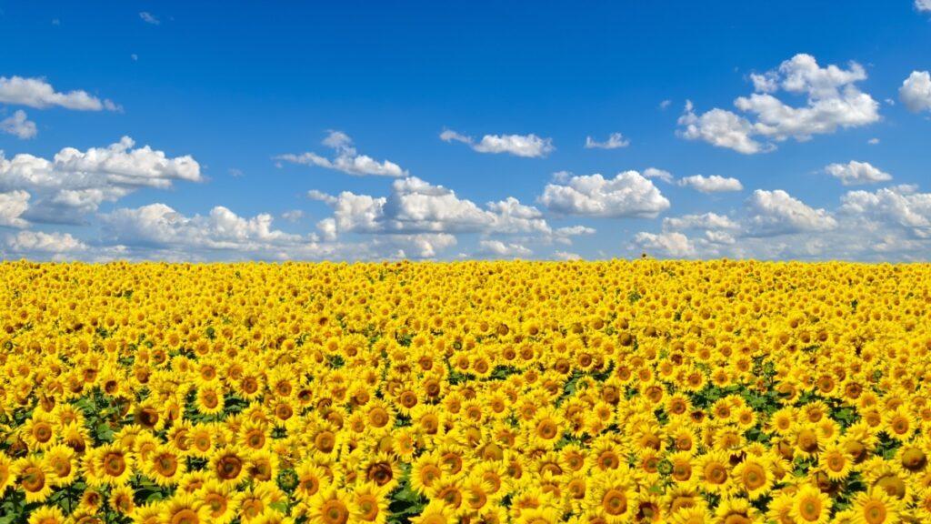 З часу старту ринку землі в Україні зареєстровано 1757 земельних угод – Мінагрополітики