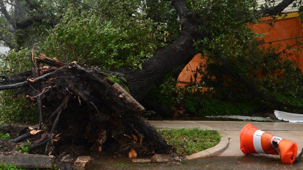 Від повалених негодою дерев довелося розчищати 4 км дороги на Херсонщині – ДСНС