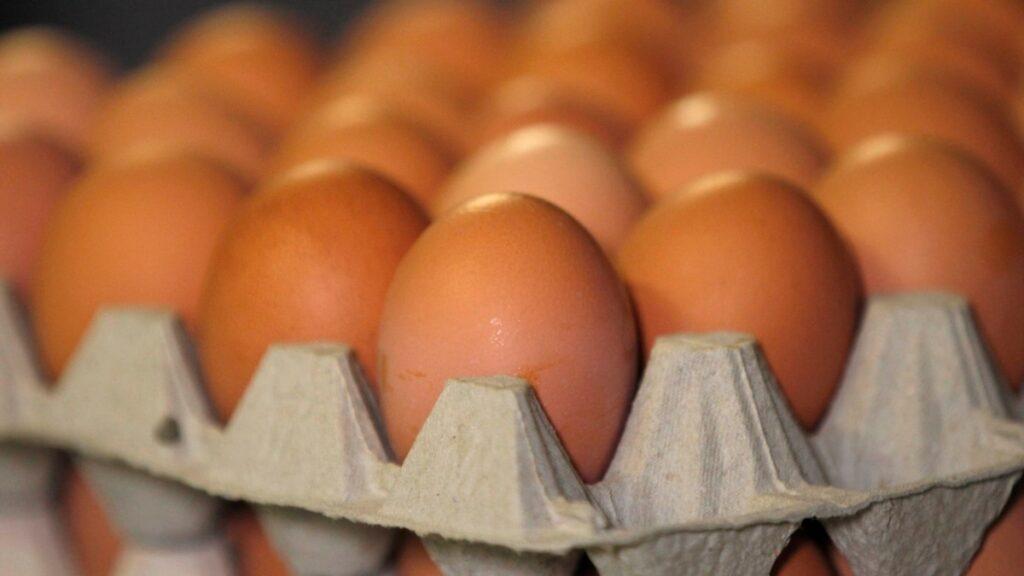 Японія зняла заборону на імпорт птиці та яєць з України – Держпродспоживслужба та МЗС